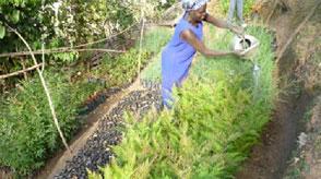 CORE Kenya horticulture