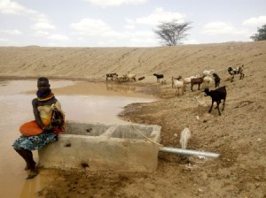 Turkana lady herder awaits her flock to quench their thirst at the newly constructed water pan in Kalobeyei, Turkana County.